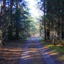 Лес пасля зімы