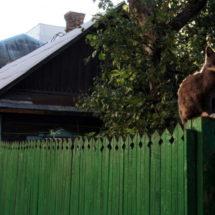 Одноэтажный Минск, который может исчезнуть