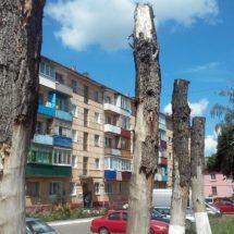 """Как в Осиповичах """"омолодили"""" деревья"""