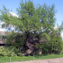 В Беларуси упрощается продажа пустующих и ветхих домов